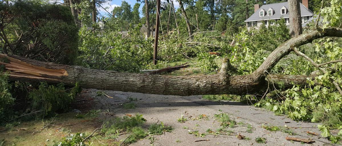 emergency_tree_service